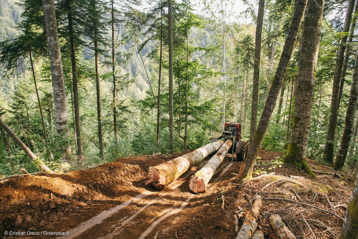 Deforestazione Romania