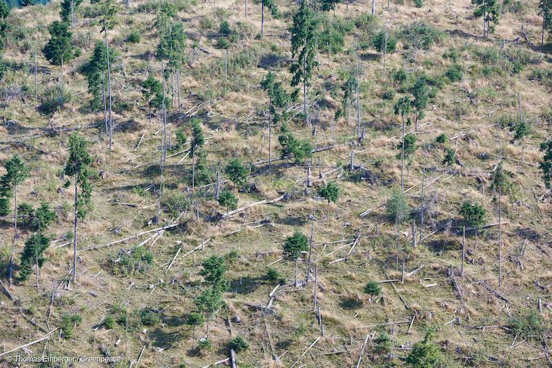 Deforestazione nei pressi di Maguri, Romania (foto di Thomas Einberger)