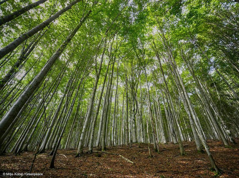 Foreste-nei-Carpazi-Romania-Deforestazione-Romania.jpg