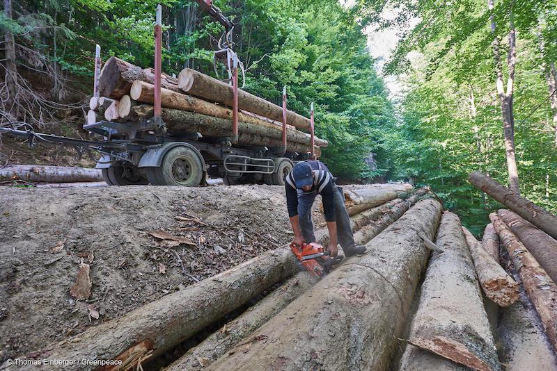 Greenpeace-1-Deforestazione-Romania.jpg