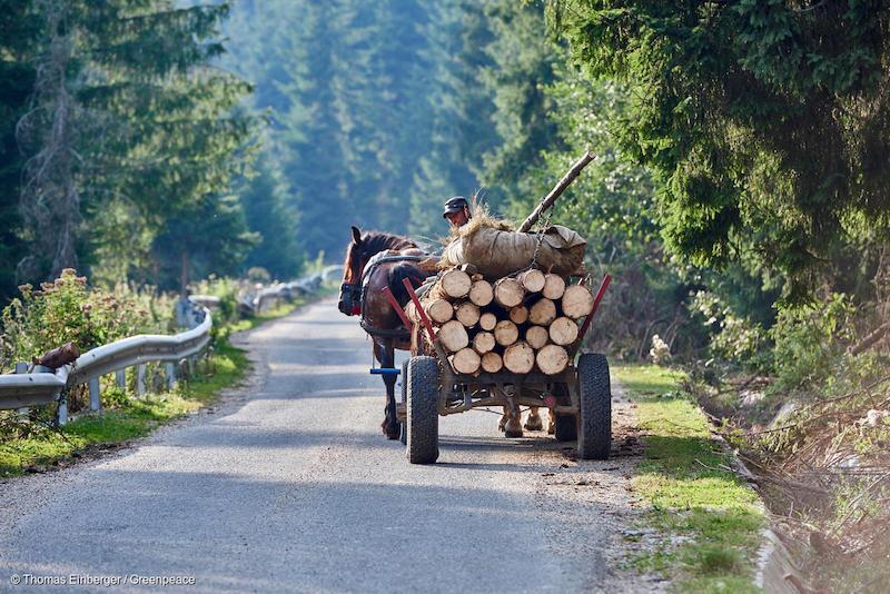 Greenpeace-3-Deforestazione-Romania.jpg