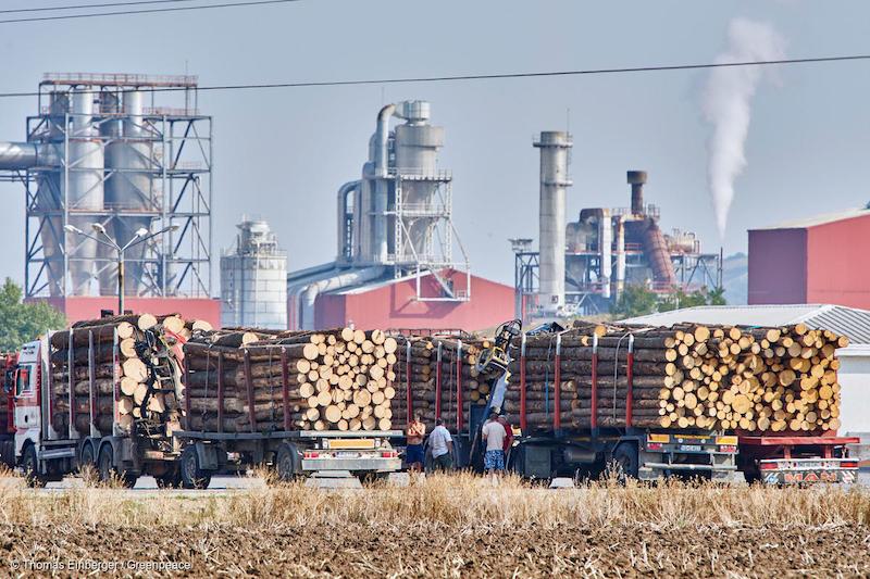 Industria-del-legname-in-Romania-Deforestazione-Romania.jpg