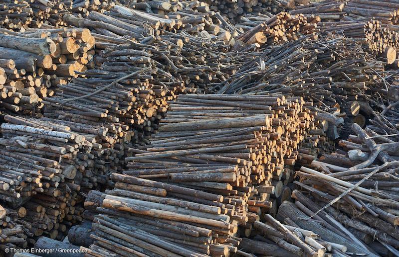 Industria-legname-Romania-Deforestazione-Romania.jpg
