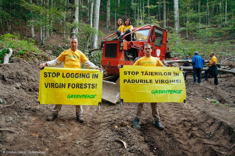 Protesta-di-Greenpeace-nelle-montagne-Ciucas-in-Romania-contro-la-deforestazione-Deforestazione-Romania.jpg