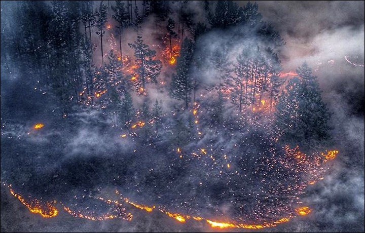 Incendi estivi in Siberia foto Siberian Times Plant the Forest