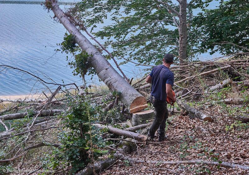 Taglialegna-allopera-in-Romania-Deforestazione-Romania.jpg