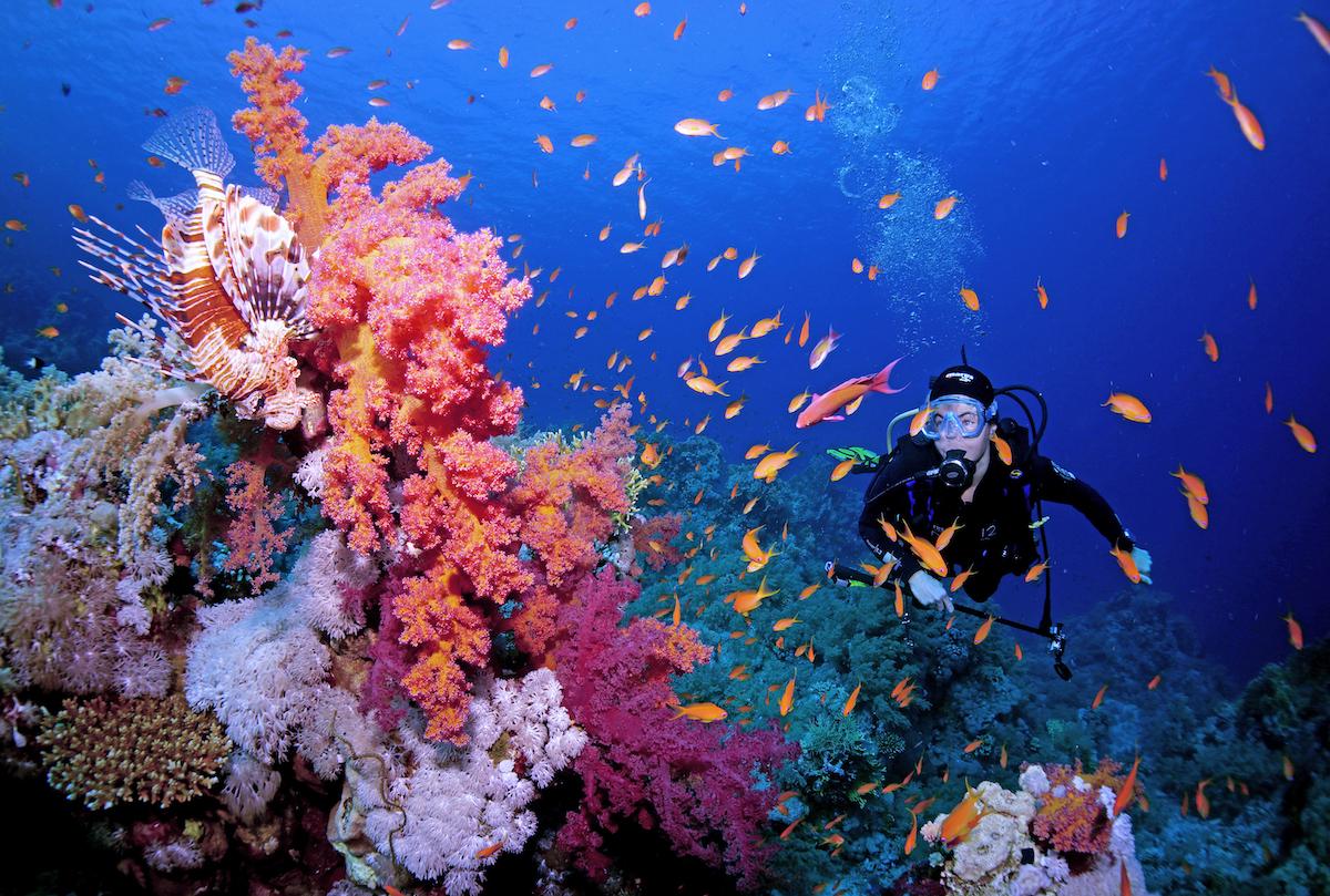 coralli-Egypt_CinziaAseleBismark_03.jpg