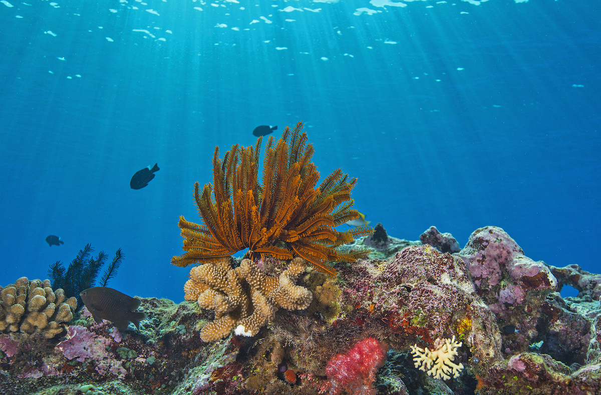 coralli-GREAT-BARRIER-REEF_JayneJenkins_102.jpg