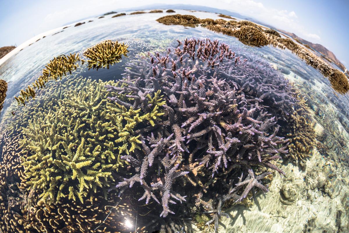 coralli-Indonesia_MartinColognoli_01.jpg