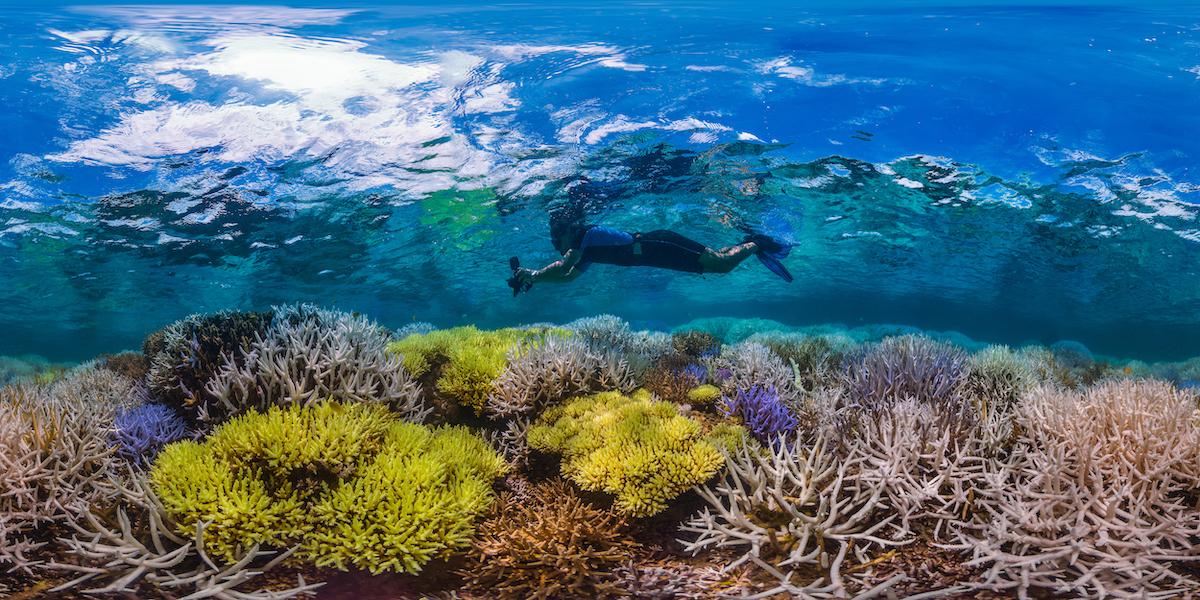 coralli in Nuova Caledonia