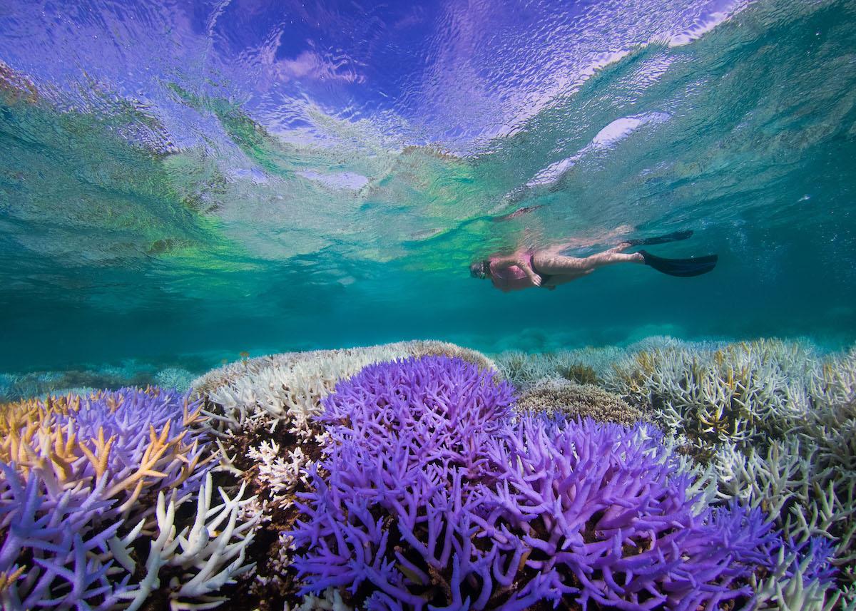 coralli-Nuova-Caledonia_Fluoresence_TheOceanAgency_10.jpg