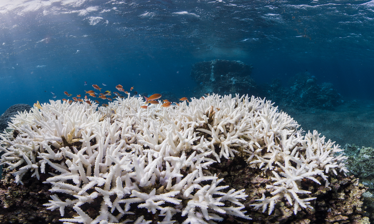 coralli Okinawa, Giappone