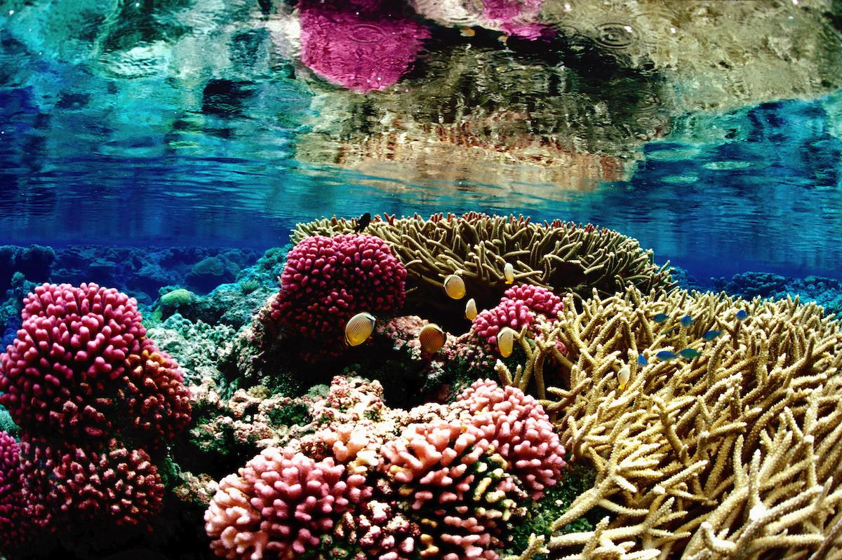 coralli-Palmyra_USFWS_02.jpg