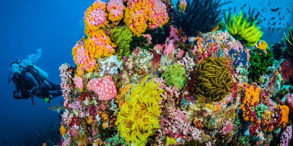 coralli a Sombrero Island, Filippine (foto Jett Britnell)