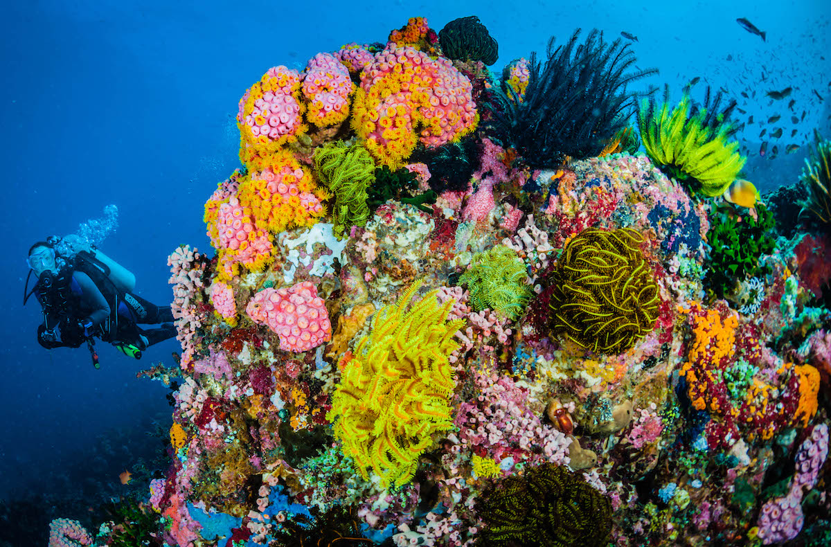 coralli-SOMBRERO-ISLAND-REEF-PHILIPPINES_Jett-Britnell_01.jpg