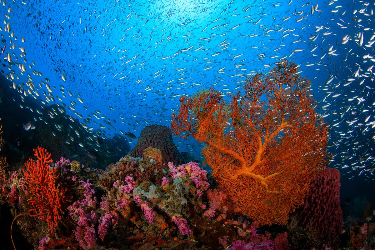 coralli-YEHLIU-TAIWAN_Yen-YiLee_03.jpg