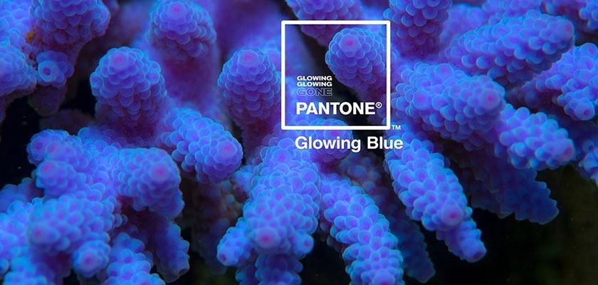 coralli Glowing Blue