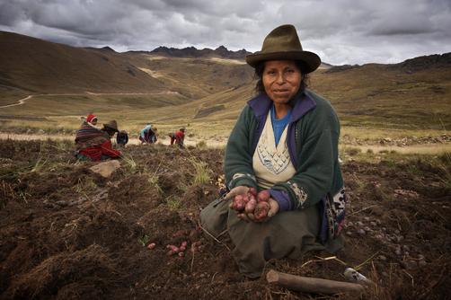 Giornata internazionale della Montagna Raccolta delle patate nelle Ande peruviane (foto Flickr)
