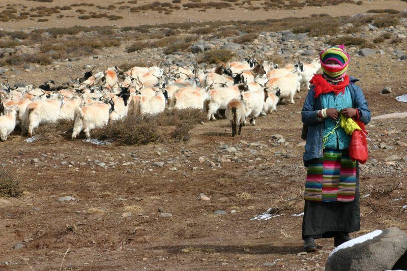 Giornata internazionale della Montagna Tibetan_shepherd_girl Nicolai Bangsgaard at Flickr