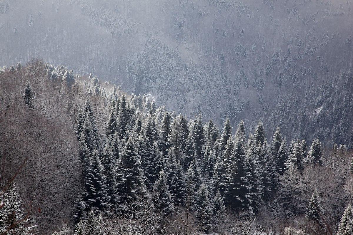 Lince dei Balcani Foreste nel parco nazionale di Mavrovo, in Macedonia del Nord (foto pagina Facebook)