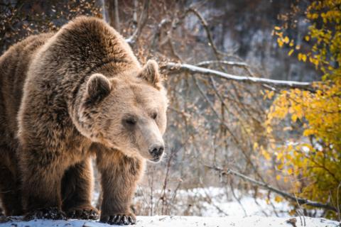 Santuario degli Orsi Pashuk neve