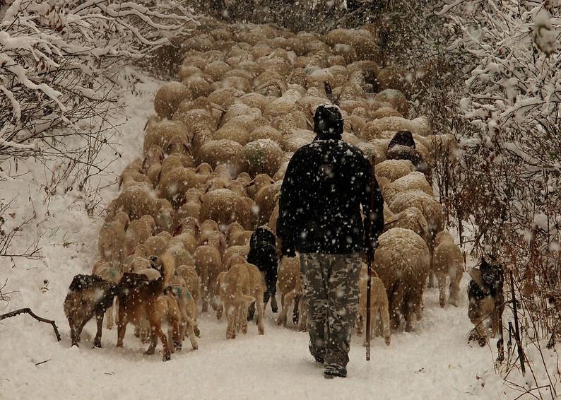 Giornata internazionale della Montagna Transumanza sotto la neve (foto di Roberto Cilenti - Flickr)