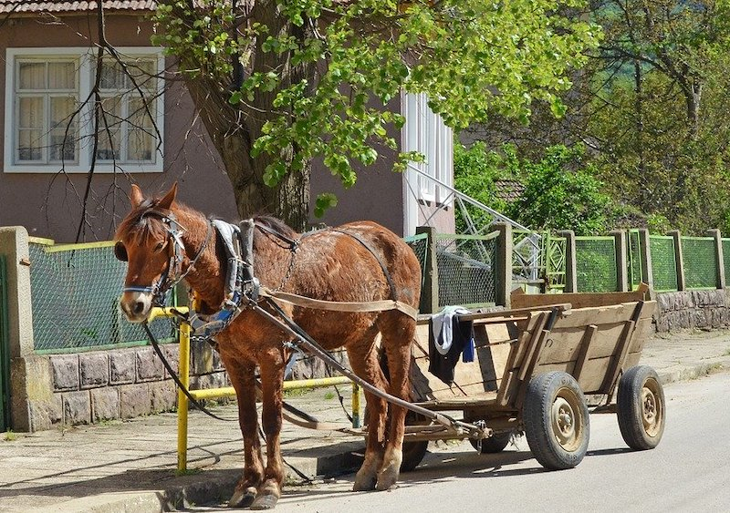 Turismo in Bulgaria cavallo