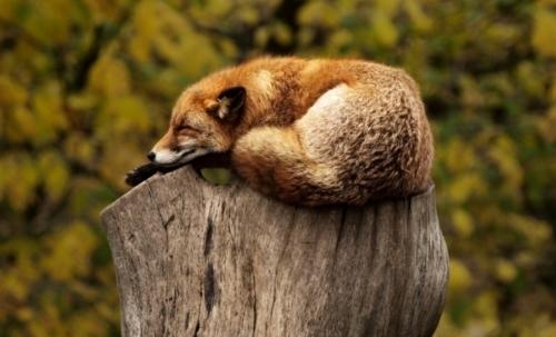World Wildlife Day 2020: il 3 marzo si celebra la biodiversità con un occhio di riguardo per la natura selvatica.