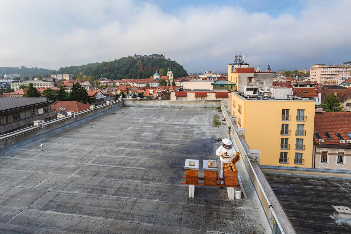 apiturismo-slovenia-F010172-urbano_cebelarstvo_ljubljana_jost_gantar_2-photo-m.jpg