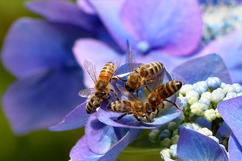 api su fiori