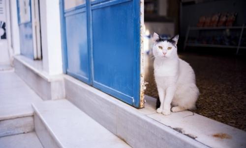 paradisi gatti grecia