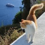 paradisi dei gatti