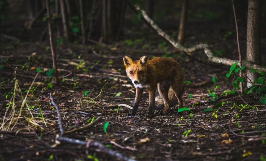 animali biodiversità epidemie coronavirus