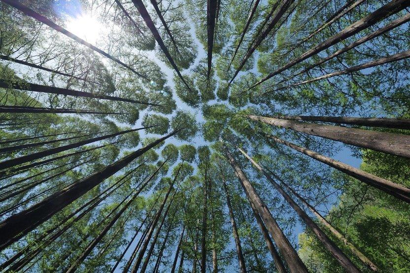Giornata Mondiale delle Foreste 2020
