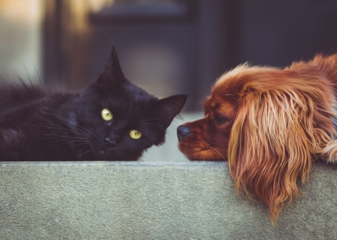 Coronavirus e animali da compagnia