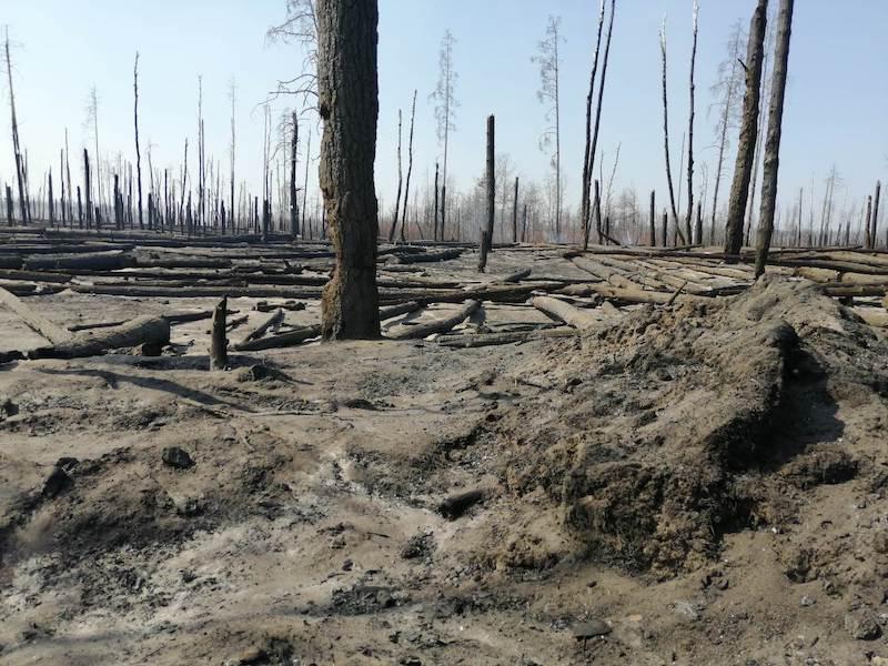 incendi nelle foreste di chernobyl