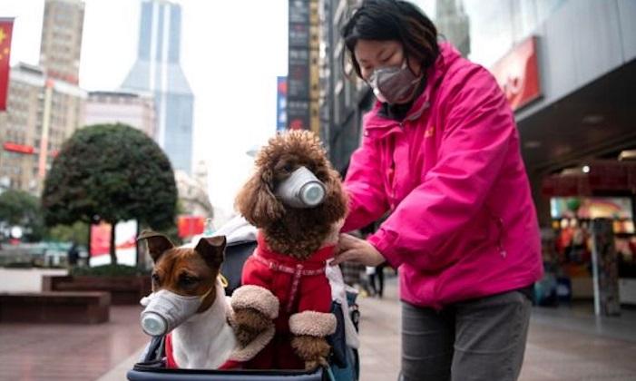 Cina vietato mangiare cani e gatti