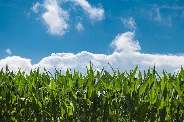 stagionali agricoli