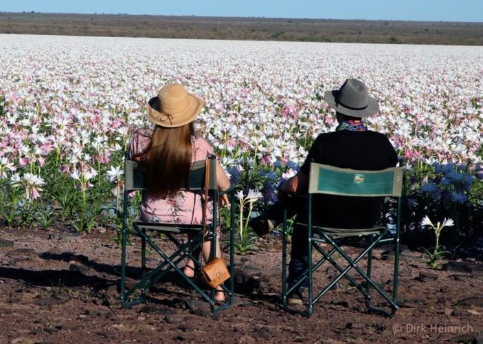 gigli-Sandhof-deserto-namibia-703x500.jpg
