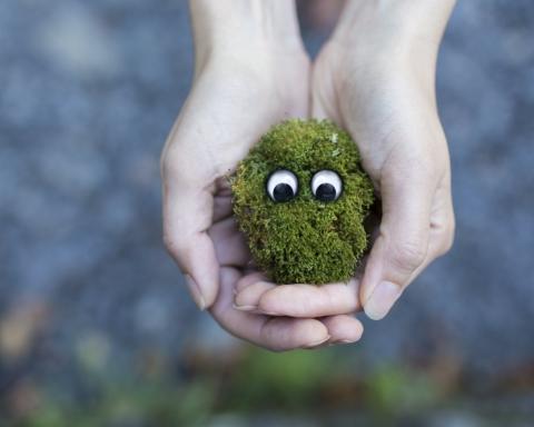 5 cose ecologiche da fare in quarantena