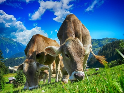 World Meat Free Day 2020