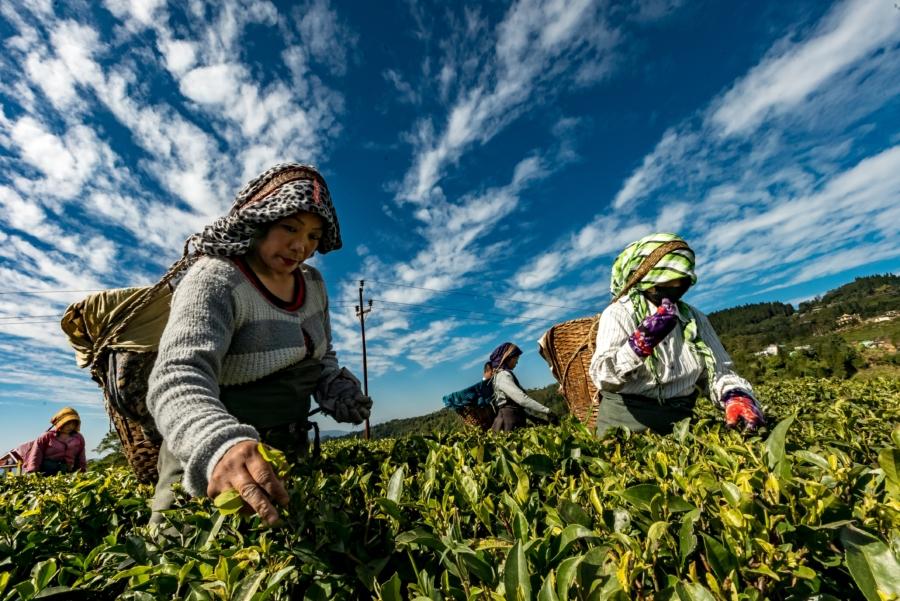 giornata mondiale sicurezza alimentare agricoltura terzo mondo.jpg
