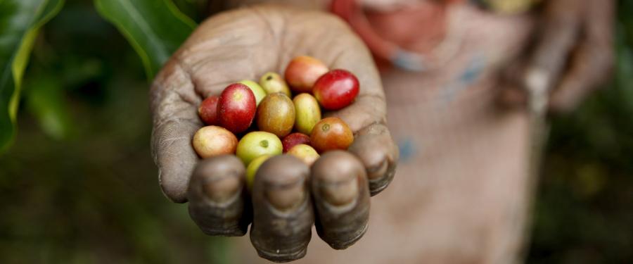 Giornata della Gastronomia Sostenibile mano con bacche frutti
