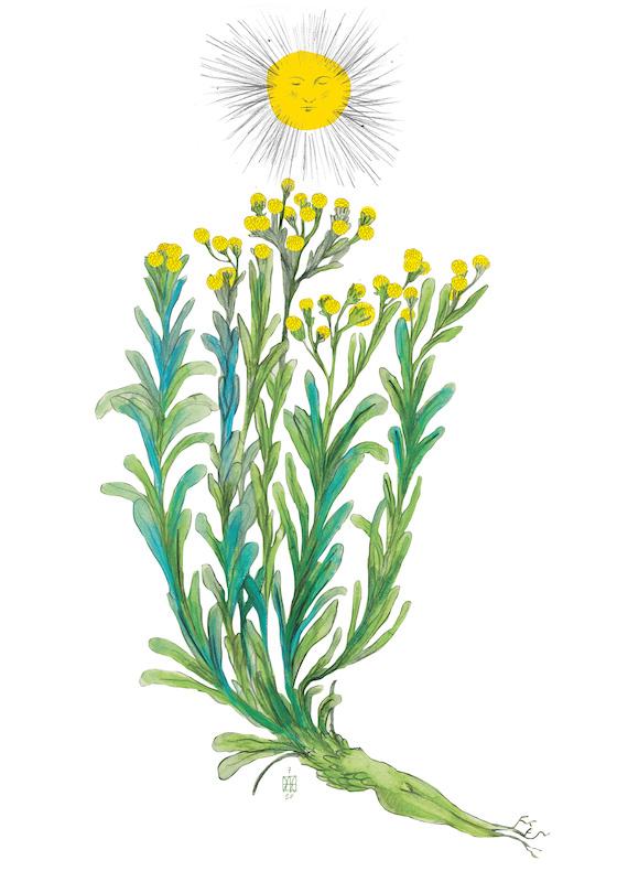 Herbarium Vagans Daniele Catalli Elicriso