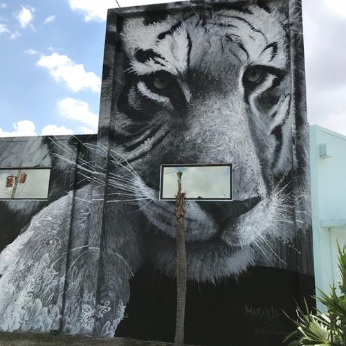 Giornata-internazionale-della-tigre-Maranje-500x500.jpg