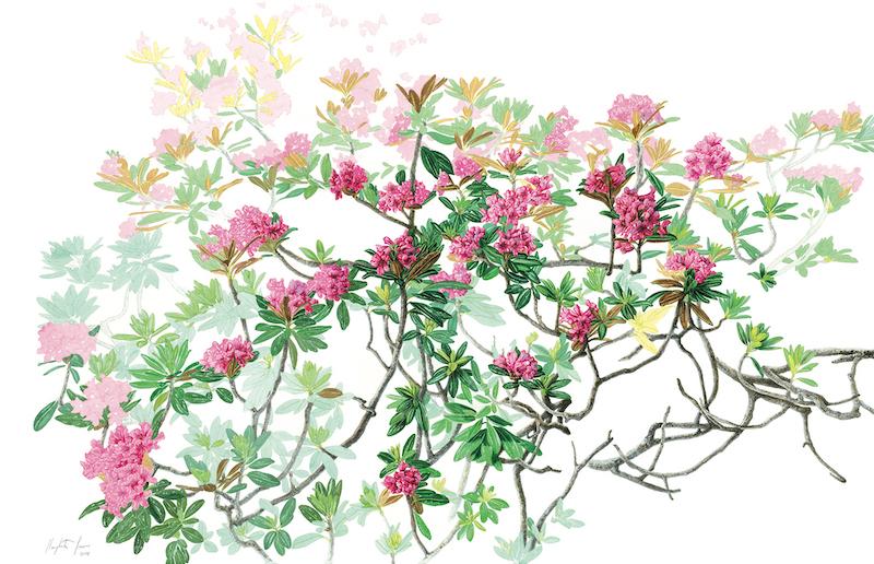 Herbarium Vagans Margherita Leoni Rhododendron ferrugineum