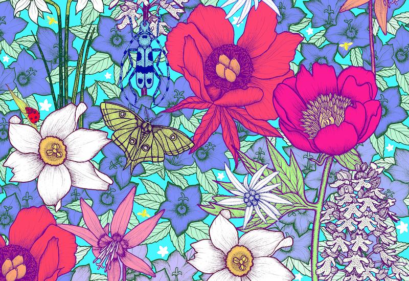 Herbarium Vagans Michael Cailloux_Alpine Nature