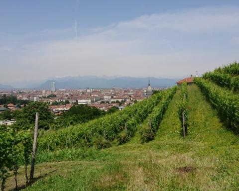 Vigne Urbane, Vigna della Regina a Torino