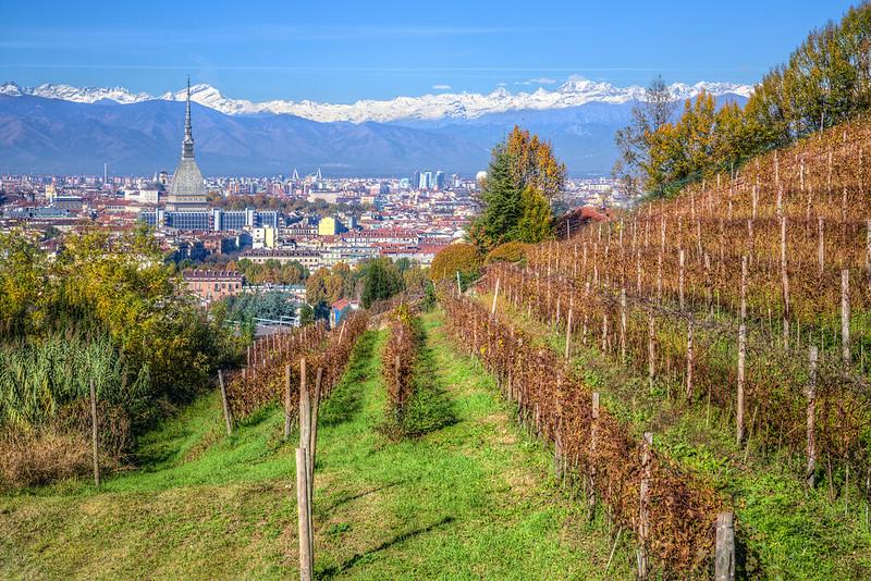 vigne urbane vigna della regina torino