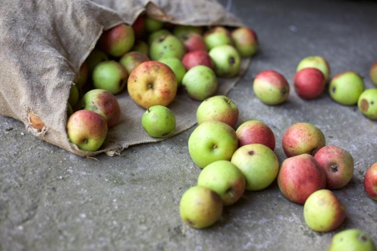Giornata Internazionale della Consapevolezza sugli Sprechi e le Perdite Alimentari